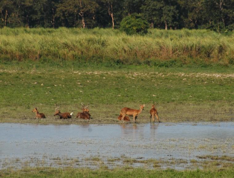 Amegin Trip Guwahti– Kaziranga Assam