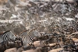 Destination Hills with Wildlife | 03 Nts 04 Days