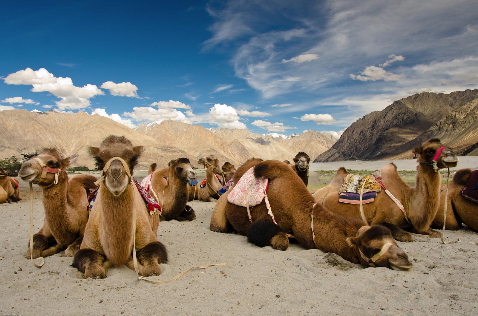 Trip Leh Ladakh Package | 13 Nts 14 Day