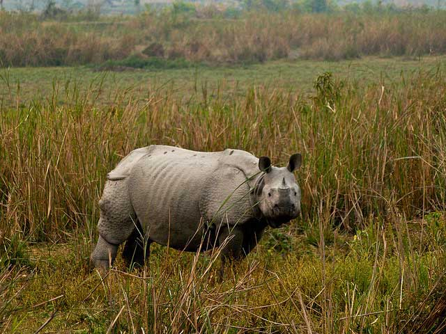 NORTH EAST PACKAGE KAZIRANGA 02 NIGHT 03 DAYS