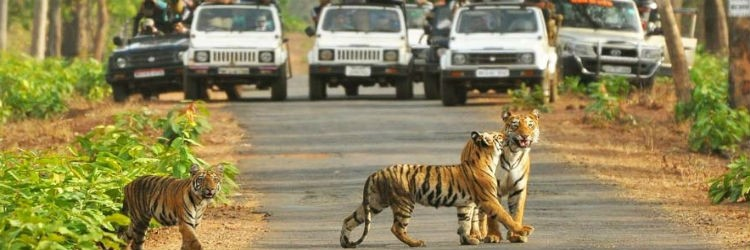 RAJASTHAN PACKAGE WILDLIFE SAFARI TOUR