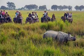 NORTH EAST PACKAGE KAZIRANGA NATIONAL PARK
