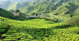 Destination Kuala Lumpur Cameroon Highlands