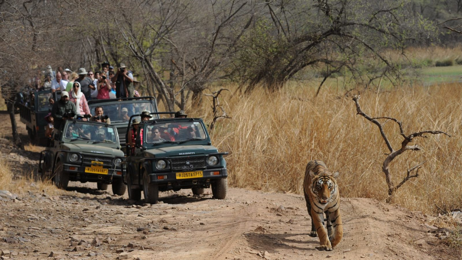 RAJAST5HAN PACKAGE  AT RANTHAMBHORE