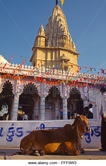 Ahmedabad 1N | LRK 1N |  Velavadar 1N |Gir 1N |  Somnath 1N |  Dwarka 1N |  Rajkot 1N