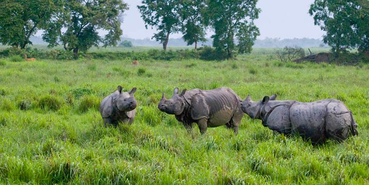 Guwahati To Assam Trip